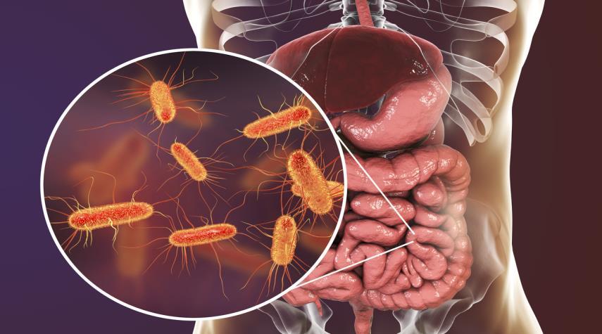نوع من بكتيريا الأمعاء يزيد من خطر الإصابة بالسرطان!!
